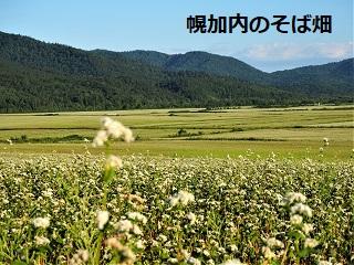 幌加内のそば畑