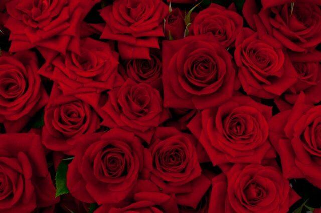 バラの花で