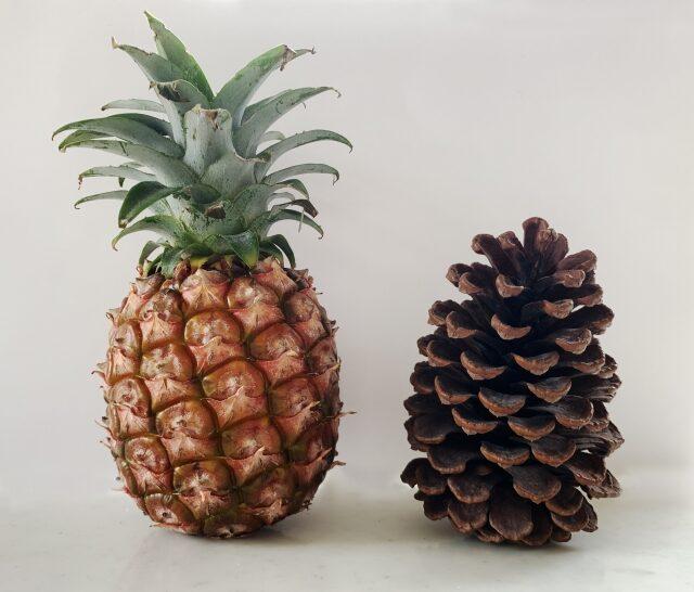 パイナップルと松ぼっくり